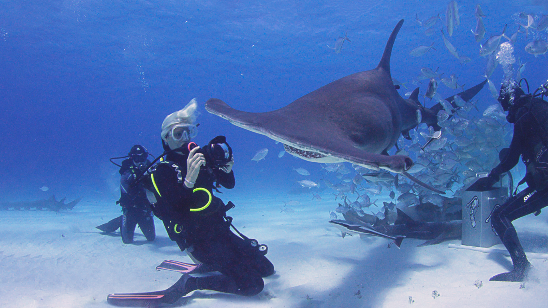 Jillian Morris Saving **sharks**