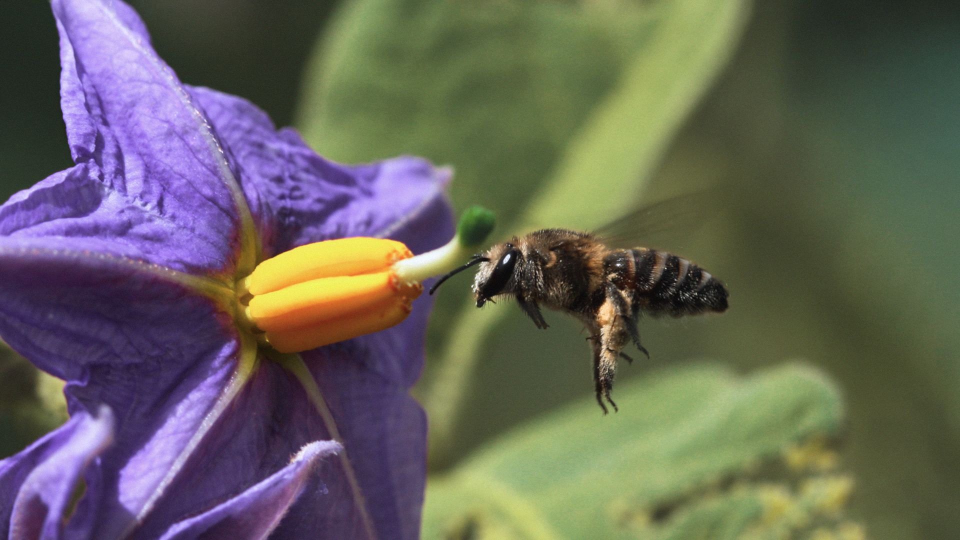 Dino Martins Fighting for **pollinators**