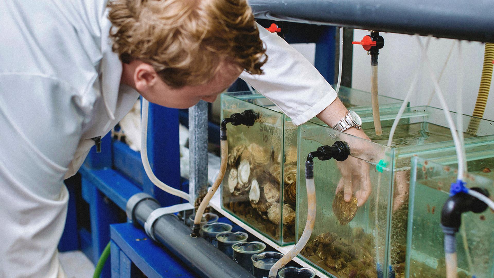 Luke Helmer Restoring **lost** oyster reefs